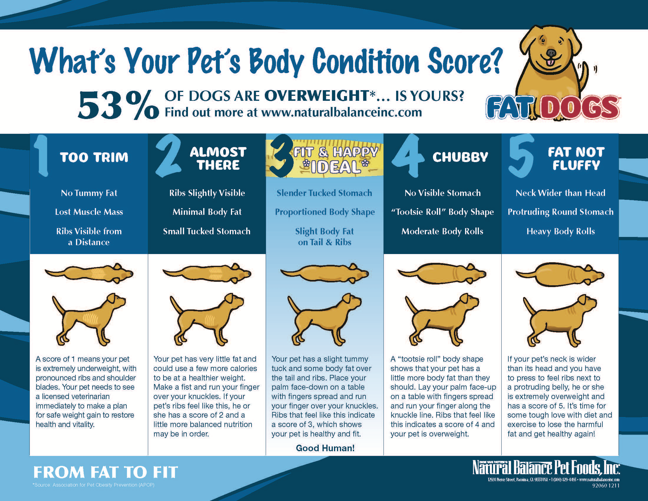 A dogs new years resolution lose 5 pounds dogshome dog chart weight nvjuhfo Image collections